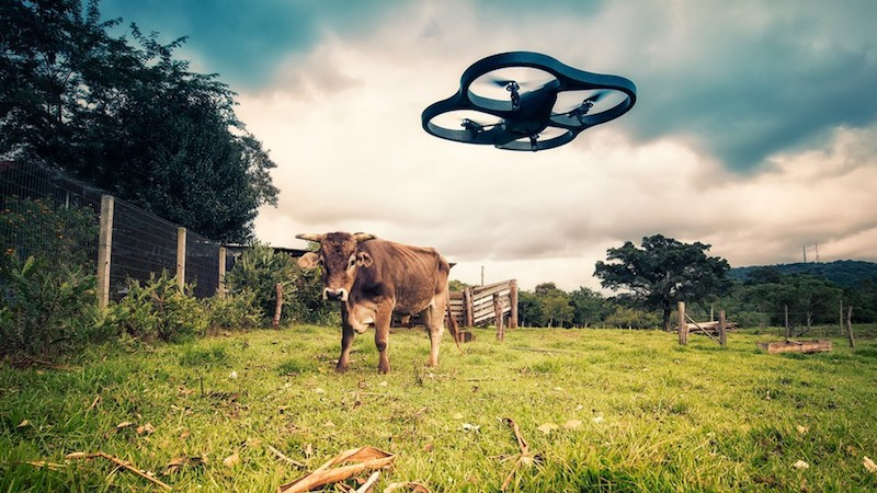 Lima Pix_Drone vs Cow_Flickr