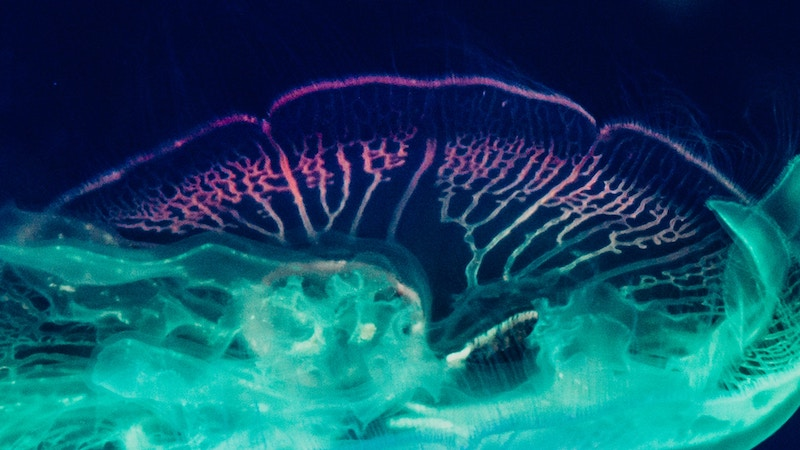 ai-jellyfish