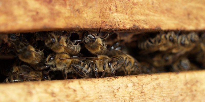 bee-beehive-bees-702931